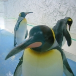 After The Panda-monium Came the Penguin – Google Updates